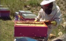 Le Secret des Abeilles, par Esther Gonon apicultrice